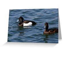 Tufted Duck pair Greeting Card