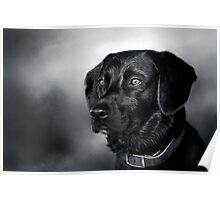 Black Lab Portrait - in Black & White Poster