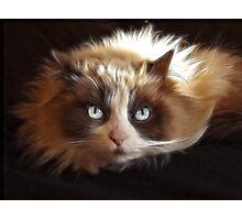 My Cat Cookie Photographic Print