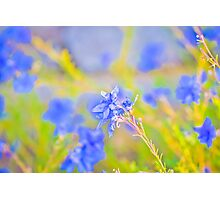 Blooming Blue Photographic Print