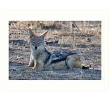 """PERFECT POSE of the """"BLACK-BACKED JACKAL"""" Art Print"""