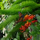 Glorious Monarch Butterfly by goddarb