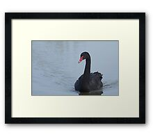 Black Swan At Dusk Framed Print