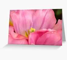 One Pink Tulip Greeting Card