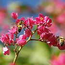 Two Bee's on Red Buds by kellimays