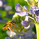 Bee and blue bonnets by kellimays