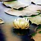 Water Lily Sunset Impression by Darlene Lankford Honeycutt