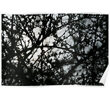 """Central Park Series """"Sun and Budding Brush"""" Poster"""