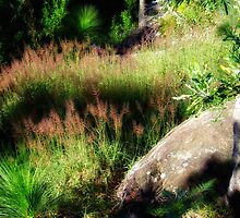 """Molasses Grass"" by debsphotos"