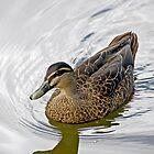 Aquatic Serenity by lner4472