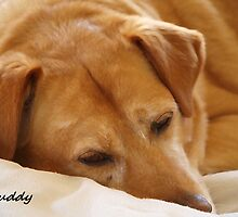 Buddy by Judy Gayle Waller