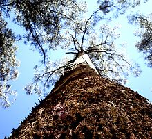 Dandenong Tree by FreeWill