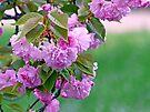 Pretty Blooms by FrankieCat