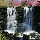 Waterfall at Big Cedar by John Carpenter