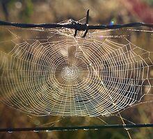 Web of Life 1. by kazzaT