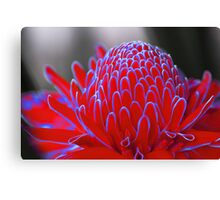 Neon Red Ginger Torch Canvas Print