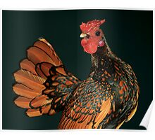 Golden Seabright Cockbird Poster