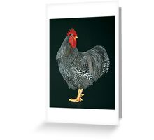 Barred Plymouth Rock Cock Greeting Card