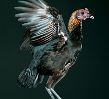 Brown Red Modern Game Hen by Norman Schwartz