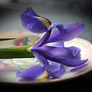 Single purple Iris by Joyce Knorz