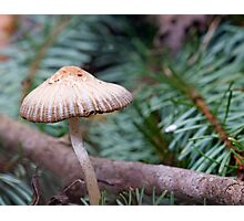Fairy Cap Photographic Print