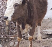 Bull by sabosha