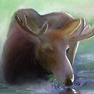 Moose in Early Morning mist by paul boast