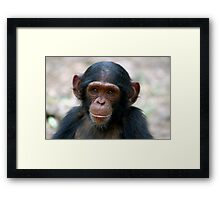 Little Chimp Framed Print