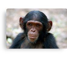Little Chimp Canvas Print