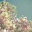 Magnolia in Bloom by Cassia