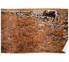 Chameleon Longhorn Poster