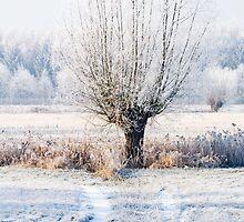 winter white willow (www) by filipmije