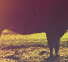 On The Farm - Photography - Nature Photography - Cow Sticker