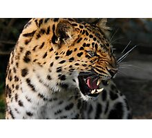 Angry Leopard Photographic Print