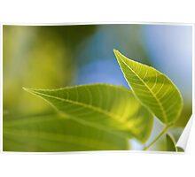 Spring Leaves Poster