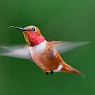 Yes one more Humming Bird by Kirk Photography                      Kirk Friederich