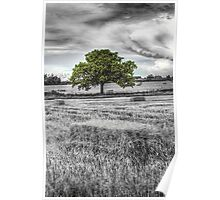 The solitary farm tree Poster