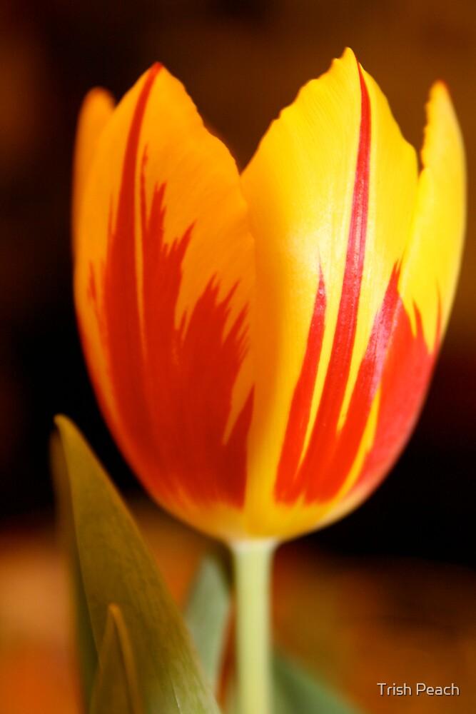 Birthday tulip by Trish Peach
