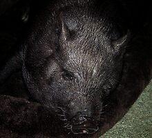 Miss Piggy For Linda Lou ....... WOOOOOOOOOO HOOOOOOOOOOOO by bamagirl38