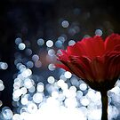 Experiments in Bokeh by Christopher Bookholt