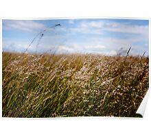Long grass Poster