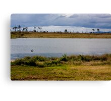 Wivenhoe Dam - with a Pelican Canvas Print