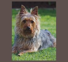 An adult male Silky Terrier. Kids Clothes