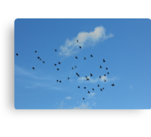 Birds migration Canvas Print