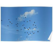 Birds migration Poster
