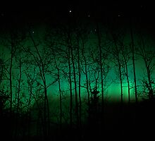 Trees and Lights  by Dave Hampton