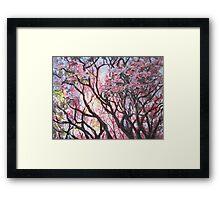 The Dogwood Tree Framed Print