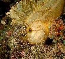 Leaf Scorpionfish (2) by Marcel Botman