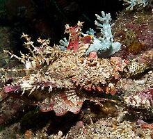 Spiny Devilfish by Marcel Botman