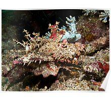 Spiny Devilfish Poster